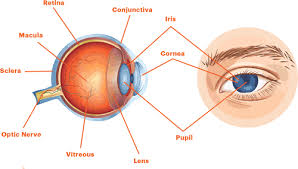 Diseases Of The Eye That Cause Blindness Kidney Disease Dialysis And Your Eyes The National Kidney