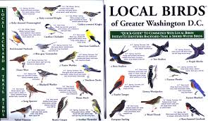 Washington birds images Local birds quick guides to nature science jpg