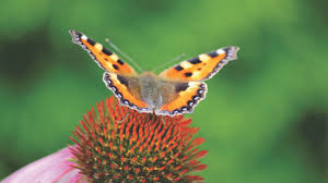 brown black and gray butterfly on and green flower free