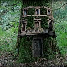 Cool Tree Houses 220 Best Cool Tree Houses Images On Pinterest Treehouses