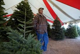 pumpkin farmers selling trees news about tucson and