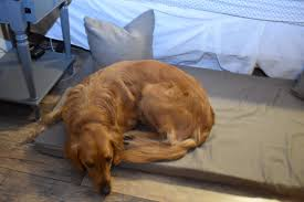 ikea dogs dog u2013 breann morgan