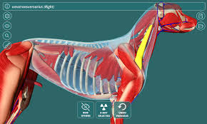 Dog Anatomy Organs Visual Anatomy 3d Canine Android Apps On Google Play