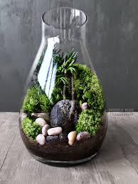 office desk terrarium carafe moss gift set live houseplants decor