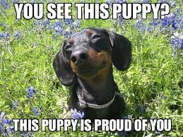 Proud Meme - proud puppy you see this puppy this puppy is proud of you
