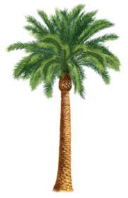 ideas about palm tree clip on tree 7 clipartandscrap