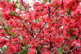 free images tree nature blossom leaf flower red produce