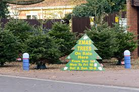 christmas trees on sale christmas trees for sale sign stock photo image of festive