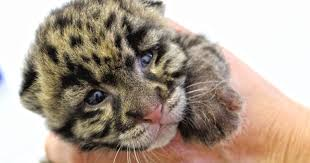 baby zoo animals you can visit around the usa
