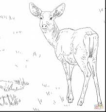 superb buck deer coloring pages with deer coloring page