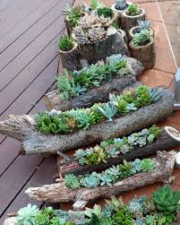 Succulent Gardens Ideas Succulent Gardens In Hollowed Out Logs And Also In Timber Rounds