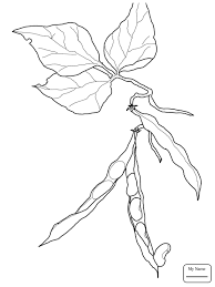 Beans Vegetables Bean Sprout Coloring Pages For Kids Deenbeazoo Com Sprout Coloring Pages