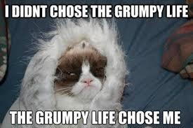 Grumpy Meme - the grumpy life grumpy cat know your meme