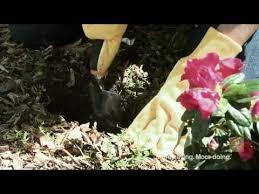 Home Depot Flower Projects - 52 best yard u0026 garden videos images on pinterest garden ideas