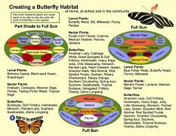 garden design budget diy landscaping with monarch butterfly