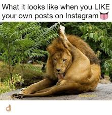 Meme Your Own Photo - what it looks like when you like your own posts on instagram