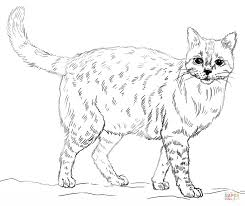 realistic animal coloring pages realistic cat coloring page free printable coloring pages