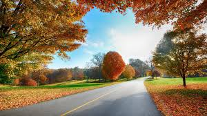 hd high resolution wallpaper for desktop colorfull trees landscape