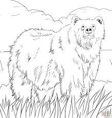 printable polar bear coloring pages kids bears print