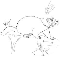 Cute Groundhog Coloring Page Free Printable Coloring Pages Groundhog Color Page