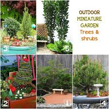 Indoor Tropical Plants For Sale - best plants for miniature gardens resource guide empress of dirt