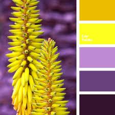 Yellow Color Combinations Aubergine Color Bright Violet Bright Yellow Dark Violet
