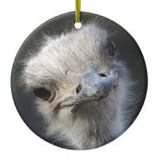 ostrich ornaments keepsake ornaments zazzle