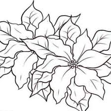 poinsettia coloring pages poinsettia in flowerpot for poinsettia day coloring page