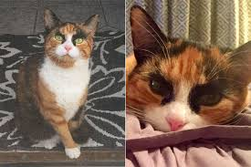 Cat Instagram Cara Delevingne Cat Has Eyebrows To Die For Metro News
