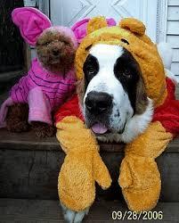 Animal Halloween Costumes Lanny Yap Animal Halloween Costumes
