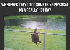Funny Weather Memes - image result for summer weather memes hows the weather
