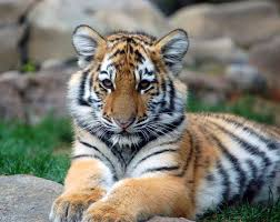 hd animals wallpapers and photos hd animals wallpapers