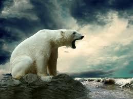 polar bear on rock