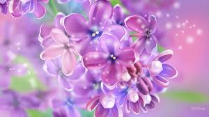 Flower Screen Backgrounds - sparkle tag wallpapers lights winter nature purple christmas tree