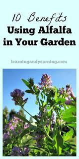 Houston Urban Gardeners - 529 best urban gardening images on pinterest urban gardening