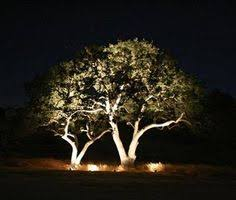 Professional Landscape Lighting Tree Uplighting Ideas Land Pinterest Landscaping Outdoor