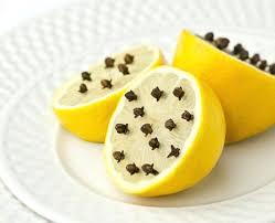 moucherons dans cuisine produit contre les moucherons cuisine se dacbarrasser des petits
