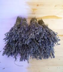 dried lavender flowers dried lavender bunch 130 stems dry english