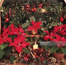 christmas decorations with plants poinsettia holly ivy apples nuts