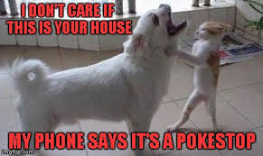 Dog On Phone Meme - i don t care if this is your house my phone says it s a pokestop meme