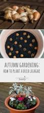 1025 best gardening u0026 garden crafts images on pinterest garden