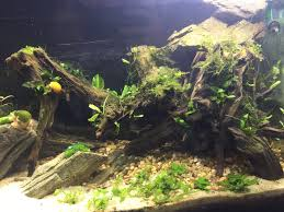 rescaping 30 gallon dirted tank tips the planted tank forum