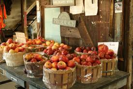 Local Pumpkin Farms In Nj by The 27 Best Farms For Apple U0026 Pumpkin Picking Near Nyc New York