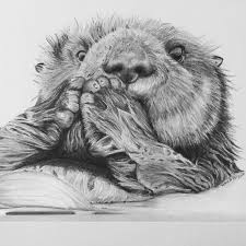 black and white sea otter pictures collection 58