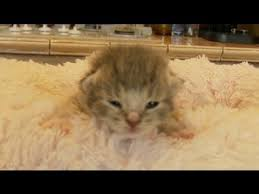 Cant Get Out Of Bed Adorable Kittens Can U0027t Get Out Of Bed Youtube