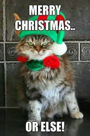 Merry Christmas Cat Meme - 223 best corgies cats at xmas images on pinterest christmas