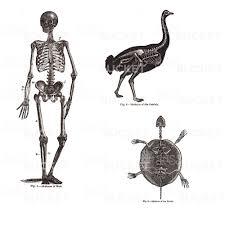 vintage halloween skeleton vector vintage halloween skeleton u0026 creepy animal images clip art