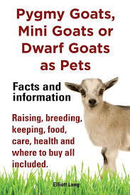 pygmy goats as pets pygmy goats mini goats or dwarf goats facts