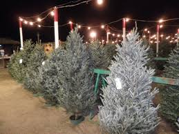check it out evergreen nursery christmas tree lots the san