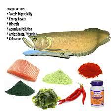 fish nutrition quality fish food information aquarium health